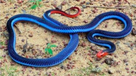 Esta bella serpiente te podría ocasionar una muerte terrible
