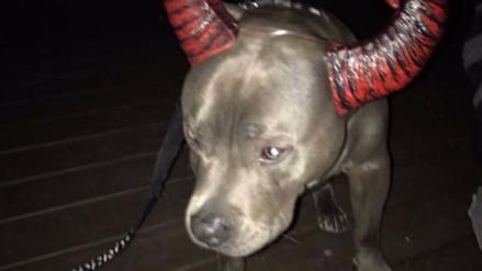 Un perro lloró al ser rechazado por su disfraz de Halloween