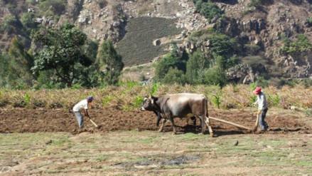 Otuzco: sequía afecta a agricultores