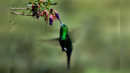 Aviturismo en Perú: mirarlas en vez de cazarlas