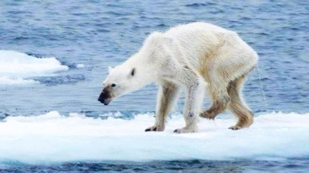 El daño que una familia promedio de EE.UU. le causa al Ártico