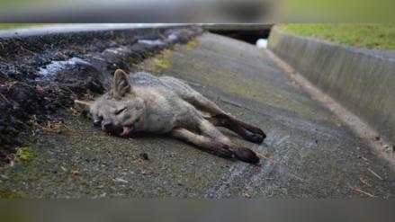 Naturaleza muerta: la fauna silvestre atropellada en Colombia