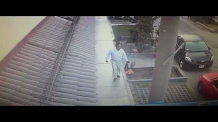 Santa Anita: Hombre bota una bolsa con gatos vivos como basura