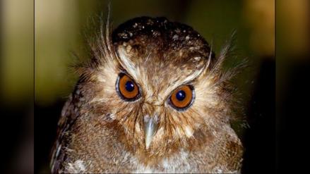 ¿Qué especies animales en Perú tienen planes de conservación?