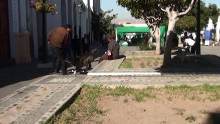 Descartan primer caso de rabia humana en Arequipa