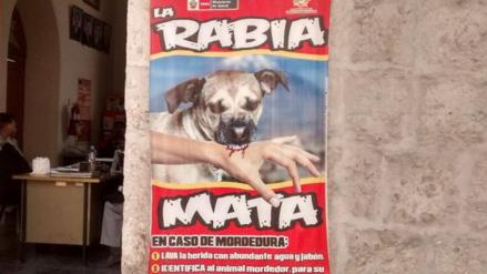 Casos de rabia canina se incrementan a 50 en Arequipa