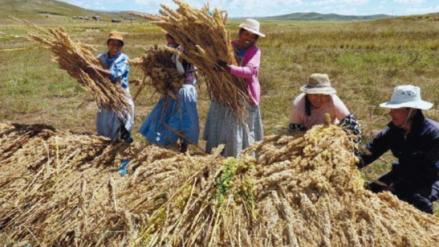 Productores de quinua rechazan nombramiento de Nadine Heredia en la FAO
