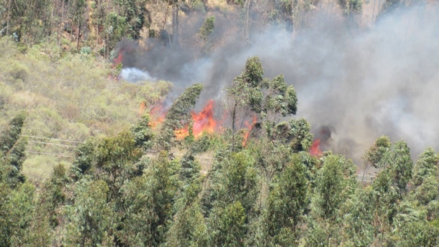 Incendio forestal: fuego consume bosques y animales en Lúcma