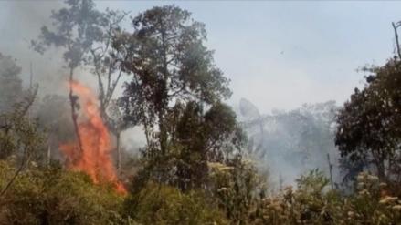 Incendios forestales arrasaron con más de 2 mil hectáreas de pastizales