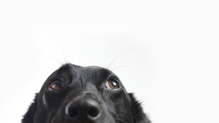 Recuerdos perrunos: así funciona la memoria episódica de tu mascota