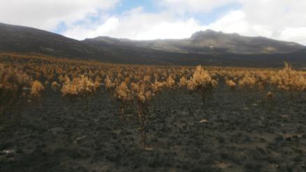 Incendios forestales en Lambayeque dejaron 150 millones de soles en pérdidas