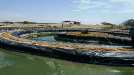 Piura: reforestan con aguas residuales sin tratar en Paita