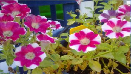 Cinco flores fáciles de cultivar durante el verano