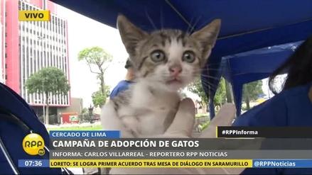 Lanzan una campaña de adopción de gatos en el Parque Universitario