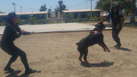 Policía Canina de Chiclayo en alerta por fiestas de Navidad y Año Nuevo