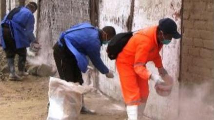 Lambayeque: intervienen en zonas de riesgo de peste bubónica en Salas