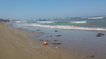 Masiva presencia de algas en orillas de playas lambayecanas