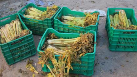 Alimentos malogrados por bloqueo en carretera Fernando Belaunde Terry