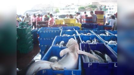 Perú prohibió desembarque de aletas sueltas de tiburón