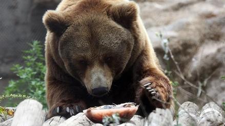 Con helados refrescan a los animales del zoológico de Santiago