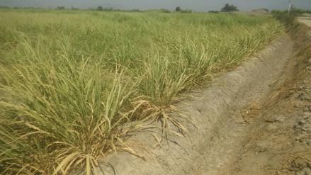 Elaboran proyectos para afrontar escasez de agua en la región Lambayeque