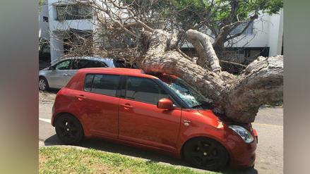 Un árbol cae sobre dos autos en donde viajaba una familia en San Isidro