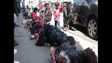 Chimbote: evitarán venta de animales en Av. Buenos Aires por fiestas