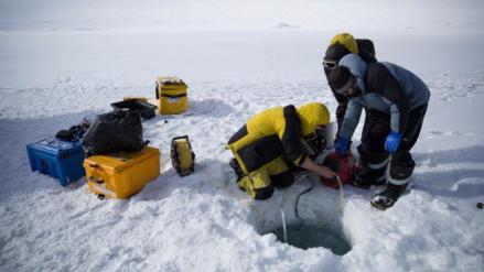 Descubre el mundo escondido bajo el hielo de la Antártida