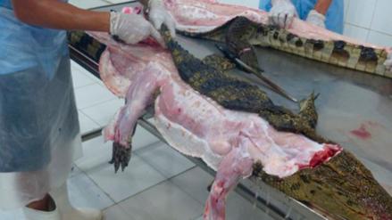 PETA denuncia que en Vietnam matan cruelmente a cocodrilos para hacer bolsos Louis Vuitton