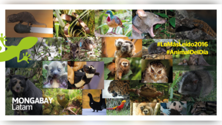 Los 25 animales que cautivaron a nuestros seguidores en el 2016