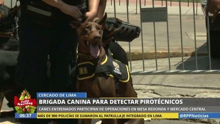 Perros entrenados detectarán pirotécnicos en Mesa Redonda