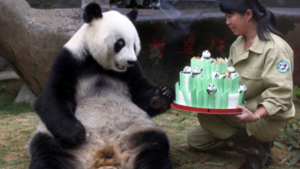 Muere Pan Pan, el abuelo de los pandas en China