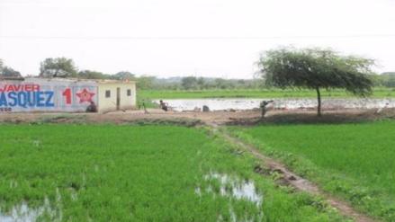 Agricultores pedirán subsidio al estado por afectación de la sequía