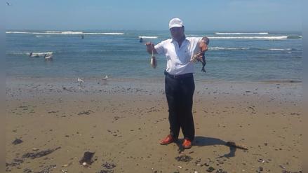 """Imarpe: fuertes oleajes causan varamiento de """"choritos"""" y algas"""