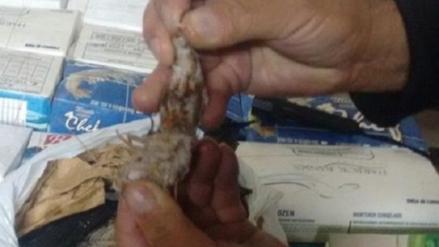Decomisan 150 kilos de camarón en periodo de veda