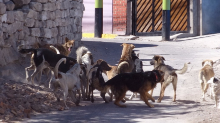 Dos nuevos casos de rabia canina en Arequipa