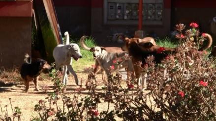Alcaldes deberán ordenar dar eutanasia a canes callejeros