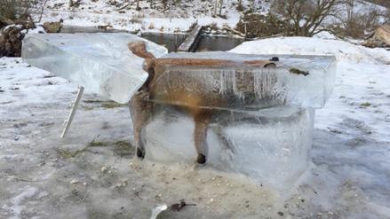La imagen del zorro totalmente congelado, símbolo de la ola de frío en Europa