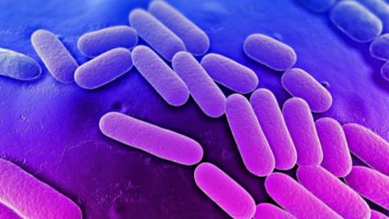 Una mujer murió en EE.UU. por una bacteria resistente a todos los antibióticos
