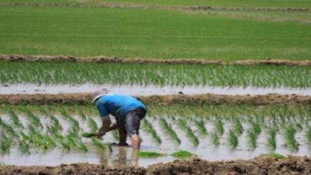 Advierten que altas temperaturas perjudicarían cultivos