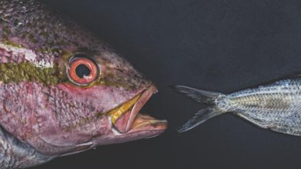 Del mar a tu plato, nuevos consejos para elegir el mejor pescado