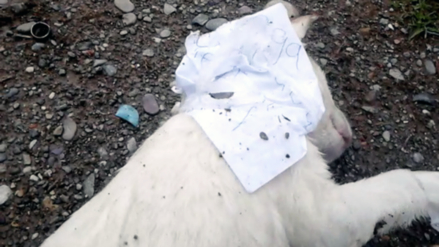 Huancayo: hallan perro muerto con amenaza de muerte a pobladora