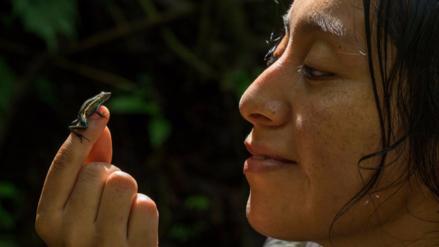 Descubren nueva especie de rana venenosa en la Amazonía peruana