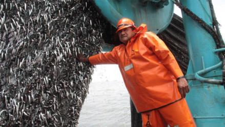 Finaliza segunda temporada de pesca de anchoveta en zona norte-centro