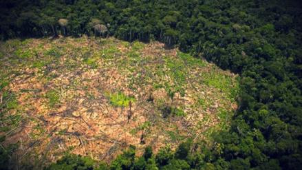 La Amazonía peruana perdió 156,000 hectáreas de selva en 2015