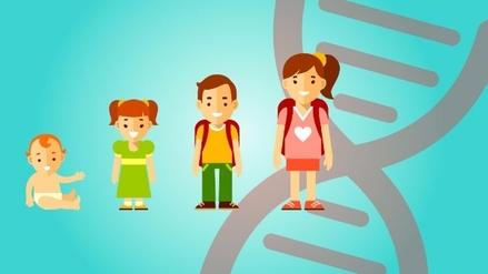 Gráfica   Qué es y por qué es importante la Hormona de Crecimiento