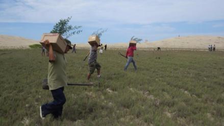 Sentenciados por delitos ambientales sembraron 500 plantones de algarrobo