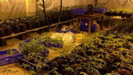 Dejaron sin luz a un pueblo entero para mantener sus plantaciones de marihuana