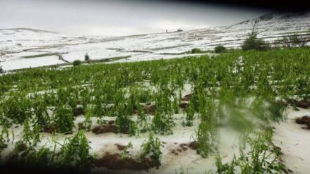 Granizada afectó cultivos y animales en provincia de Quispicanchi