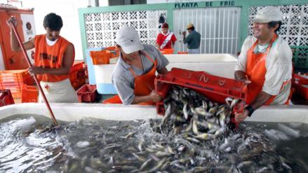 ¿Cómo afecta el cambio climático a las especies marinas en el Perú?